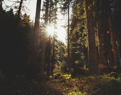 BIJNA VOL  |  Mindful Retraite Dag | zondag 22 september | Poortgebouw van Elswout